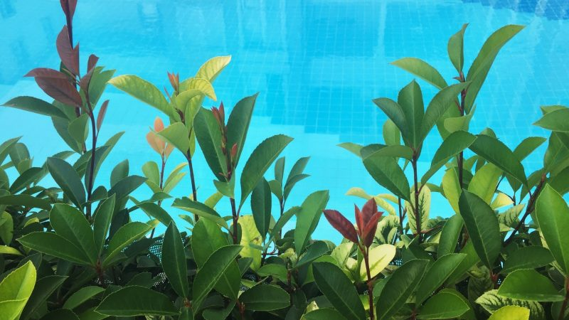 non climbable plants for your pool